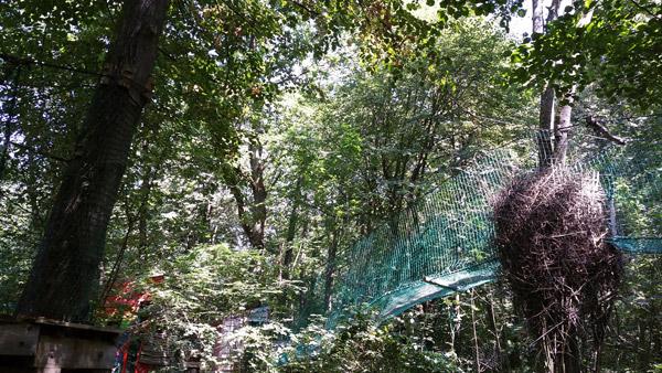 Parcours pour enfants (et grands) dans les arbres