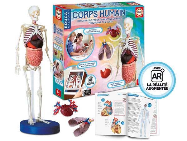 corps-humain-squelette-educa