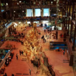 Découverte de la Grande galerie de l'évolution pour petit de 2 ans