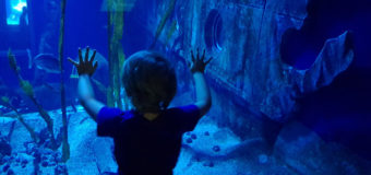 Sea Life – l'étrange aquarium à côté de Paris