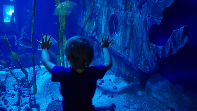 aquarium-sea-life-paris-enfant