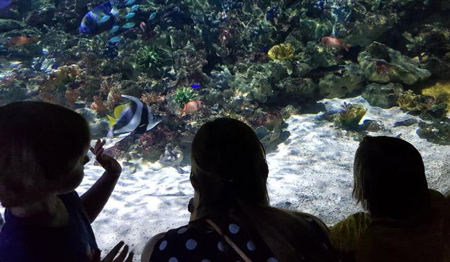 aquarium-sea-life-paris